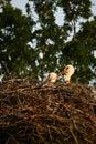 Nest of storks Royalty Free Stock Image
