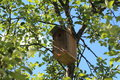 A nesting box summer in leningrad region russia Royalty Free Stock Photos