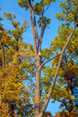 Nesting box on a tree in sunny autumn day Royalty Free Stock Photo