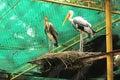 Nestling heron indian national park Royalty Free Stock Image