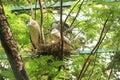 Nestling heron indian national park Stock Photo