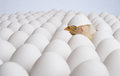 Nestling one yellow chicken on many hen s eggs sleep horizontal photo Stock Photo