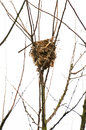 Nests deserted and ruined in wildlife Royalty Free Stock Photo