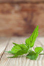 Nettle close up of fresh stinging on wooden background shallow dof Royalty Free Stock Images