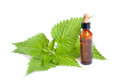 Nettle extract with bottle isolated on white Stock Image