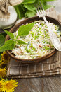Nettle salad with cabbage Royalty Free Stock Photo