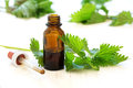 Nettle tincture in a small bottle and fresh leaves on white wood