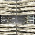 Network cables connected to switch Royalty Free Stock Photo