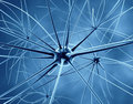 Neurons and nervous system Royalty Free Stock Image