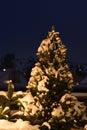 A neve cobriu a árvore de abeto Imagem de Stock