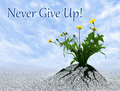 Never Give Up Royalty Free Stock Photo