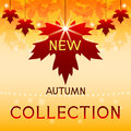 New autumn collection background with maple leaves autumnal poster foliage red and inscription Royalty Free Stock Image