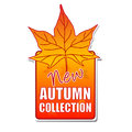 New autumn collection label with leaf Stock Photography