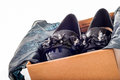 New black feminine beautiful patent leather shoes in a box isola Royalty Free Stock Photo