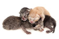 New born cat kittens on white background Royalty Free Stock Photos