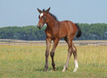 A new born foal on a pasture makes first advances Stock Photo