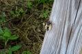 New cicada Royalty Free Stock Photo