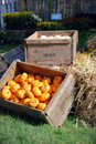 New england farm stand nice country with pumpkins and garlic for sale in a small town Royalty Free Stock Photography