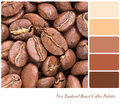New england roast coffee bean colour palette with complimentary swatches part of a series of five images showing grades of roasted Stock Image