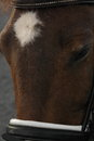 New forest pony head a Stock Images