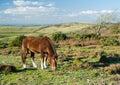 New forrest pony Royalty Free Stock Photo