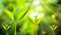 New fresh small plant growth up on green blurred nature Royalty Free Stock Photo