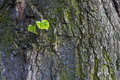 New green leaves born on old tree, textured background. New life metaphor Royalty Free Stock Photo