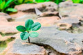 New green leaves born on stone textured background nature stock photo select focus Royalty Free Stock Photography