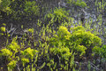 New growth mangrove swamp Royalty Free Stock Photo