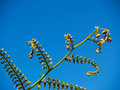 New growth, tree fern frond. Stock Photos