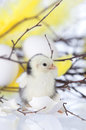 New hatch chicken standing next to egg shells gn with a branch with yellow feathers Stock Images
