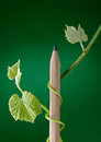 New ideas growth sprouting from pencil Stock Image