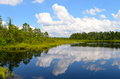 New jersey pine lands a reflecting pool in the on a summer day Royalty Free Stock Image