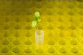 New laboratory life macro of small plant in tube over yellow tube holder background Stock Photo