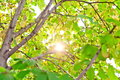 New leaf and sun ray Royalty Free Stock Photo