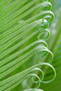 New leaves Royalty Free Stock Image