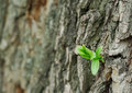 New life on bark background Royalty Free Stock Images