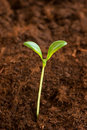 New life concept - green seedling Royalty Free Stock Photo