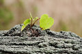 New life concept leaves on the tree trunk in spring Royalty Free Stock Photos