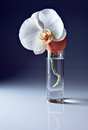 New life egg and orchid in glass with water Royalty Free Stock Photo