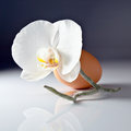 New life egg and orchid on white reflexive background Royalty Free Stock Photography