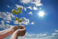New life hands holding a plant against blue sky towards the sunlight Stock Photo