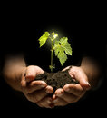 New life in hands holding sapling soi Royalty Free Stock Images