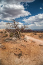 New mexico high desert a hiking trail and gnarled tree overlook a wide expanse of threatening storm clouds and in abiquiu Stock Photos