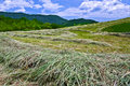 New Mown Hay Royalty Free Stock Photo