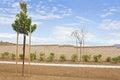 New Neighborhood Trees Stock Photography