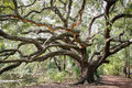 New Orleans City Park Oak Tree Royalty Free Stock Photo
