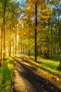 The new park of Moscow, fresh paths and the sun`s rays through the crowns of trees. Vnukovo