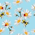 Seamless pattern of Daisy chamomile, cornflowers with ladybird, bee on baby blue background. Royalty Free Stock Photo