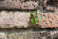 New plant germinates from brickwall Royalty Free Stock Image